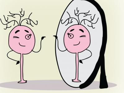 Ahlaki İkilemlerde Kişinin Verdiği Kararlar Ayna Nöronlarının Aktivitesi Tarafından Öngörülür.